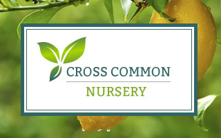 Cross Common Nursery